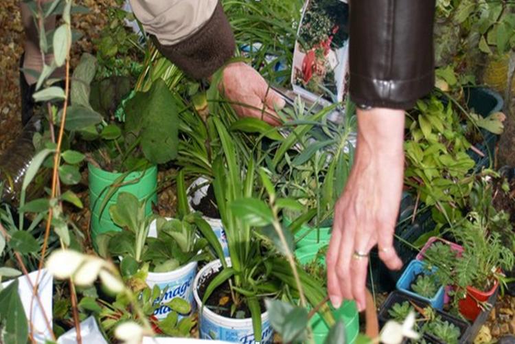 Bourse aux plantes – 10 mai 2020