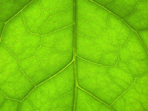 Les 10 combats écologistes du moment